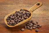 rustic scoop of roasted coffee beans against a grunge painted wood background