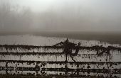 Debris Covered Fence