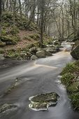 Autumn Fall Forest Landscape Stream Flowing Through Golden Vibrant Foliage And Rocks
