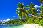 pure tropics, scenic beach with coconut palms