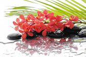 Red orchid with black stones with green palm background