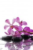 branch pink orchid with black stones