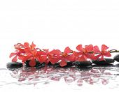Lying down Beautiful orchid and black stones