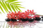 Branch orchid and wet black stones with palm leaf