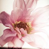 A close up of a flower with grungy vintage photography treatment.