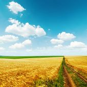 road in golden field with harvest under blue sky with clouds