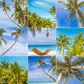 collage set of tropical beach vacation, summer holidays, relax on sand beach, coconut tree palms, sky and beach background collection