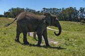 Elephants await eats in Chapel & Lapa reserve