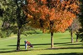 Outono golfista andando