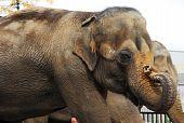 Entertaining Elephant