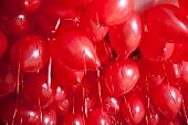 pic of helium  - very many red heart balloons filled with helium at a ceiling - JPG