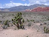 Plant Life At Red Rock Canyon