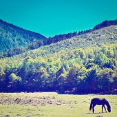 pic of feeding horse  - Horses Grazing on a Meadow of the French Alps Retro Effect - JPG
