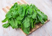 picture of sorrel  - fresh sorrel on a wooden kitchen board - JPG