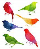 foto of mockingbird  - Birds Silhouette - JPG