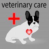 foto of veterinary  - Veterinary care - JPG