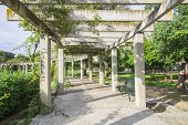 pic of creeper  - Large pergola with hanging creepers in a park - JPG