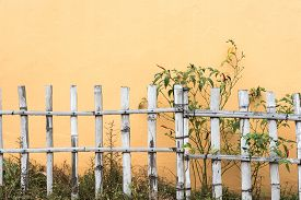 picture of bamboo  - Fences walls bamboo grass - JPG