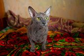 Gray Cat Sitting And Looking At The Camera poster