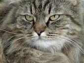 Serious Tomcat poster