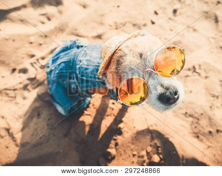 poster of Chihuahua Wearing Sunglasses And Straw Hat Sits On A Beach By The River Enjoying The Sun. Fashionabl