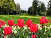 A Beautiful View Of A Golf Course With A Green Surrounded By Evergreen Forest In The Background, And poster