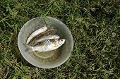 Fish Fresh Water Grass Outdoor Bowl