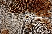 Tree Ring Texture