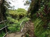 Akaka Falls Hilo,Hawaii