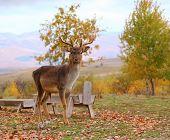 Deer Buck In An Enclousure