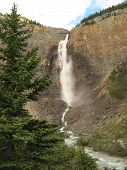 Takakkaw Falls and Fir