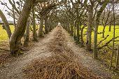 Allee con ramas cortadas