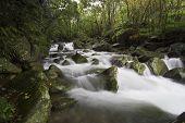 Natural Stream