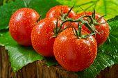 Reben gereifte Tomaten