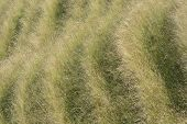 Patterns In Grassy Hillside. Wiltshire. UK