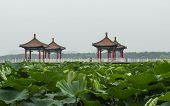 Lotus pond and the traditional hexiang