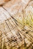 Sawed Wood