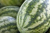 Watermelons Close Up