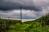Storm Clouds Over Corn Fields And Utility Poles In Rural York County, Pennsylvania.