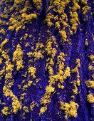 Blue Bark & Yellow Lichen poster