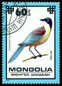 Vintage  Postage Stamp. Blue Magpie.