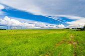 Field Landscape Green Plain