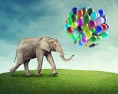 Elephant with a colorful balloons