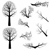 image of dead plant  - Dead trees silhouette and branches without leaves on white background - JPG