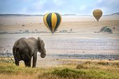 foto of terrestrial animal  - African elephant foggy morning ballons landing on background Masai Mara National Reserve Kenya - JPG