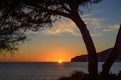 pic of elm  - Tree framing sunset in Sant Elm - JPG