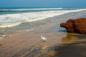 Beautiful Landscape Of The Coast With A White Bird Of Varkala. India, Kerala