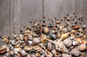 Large group of conchs and shells over a wooden background