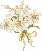 Bunch of lilies isolated over white background