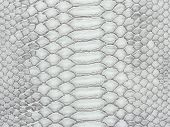 picture of venomous animals  - Snake skin texture closeup pattern for background - JPG